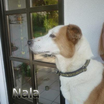 Nala_Update_18102019-(8)web