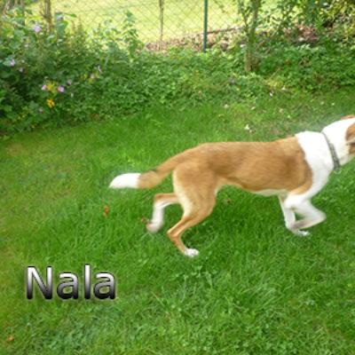 Nala_Update_18102019-(9)web