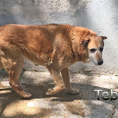 Tebel-(1)web