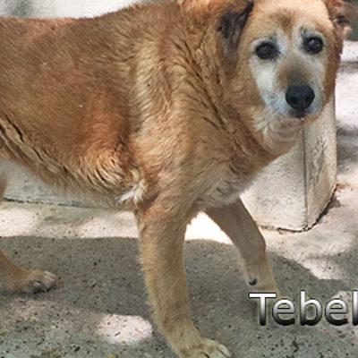 Tebel-(4)web