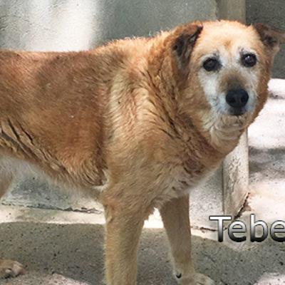 Tebel-(5)web