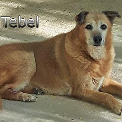 Tebel(1)web