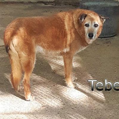 Tebelweb