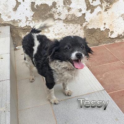 Tessy-(1)web