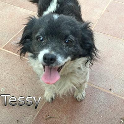 Tessy-(2)web