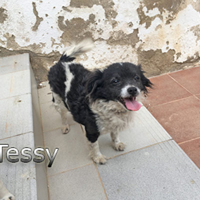Tessy-(3)web