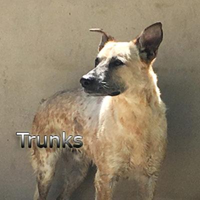 Trunks-(11)web
