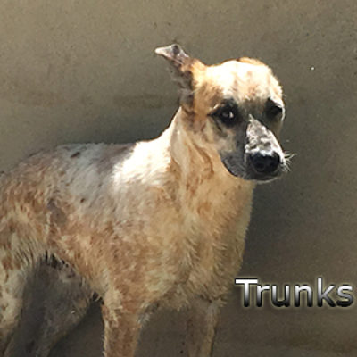 Trunks-(1)web