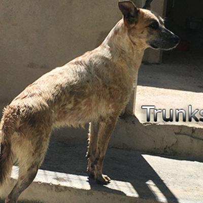 Trunks-(9)web