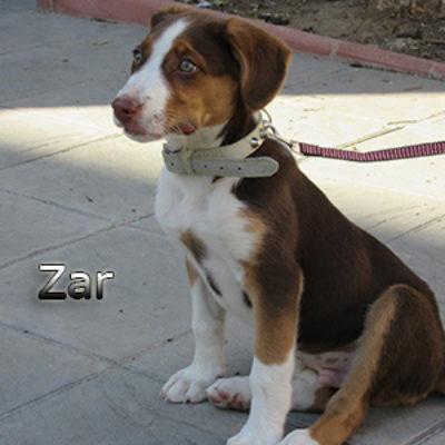 Zar-(1)web