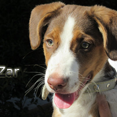 Zar-(5)web