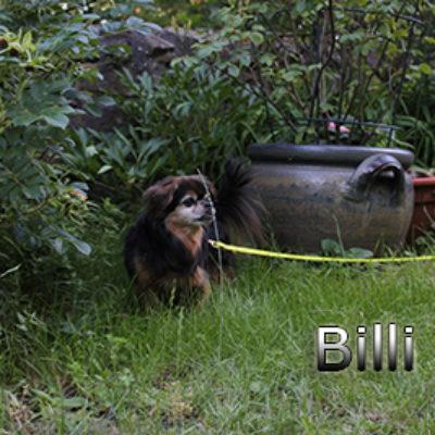 Billi-(10)web