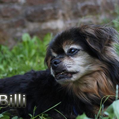 Billi-(12)web