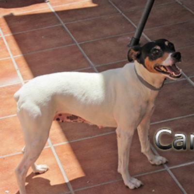 Cana-(3)web