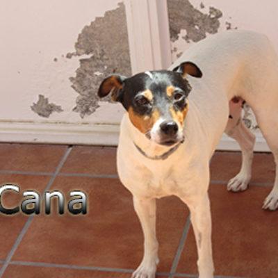 Cana-(4)web