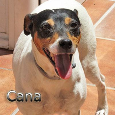Cana-(5)tsweb