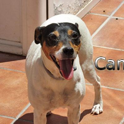 Cana-(5)web