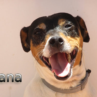 Cana-(6)web