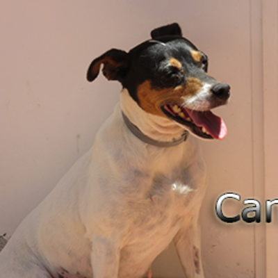 Cana-(7)web
