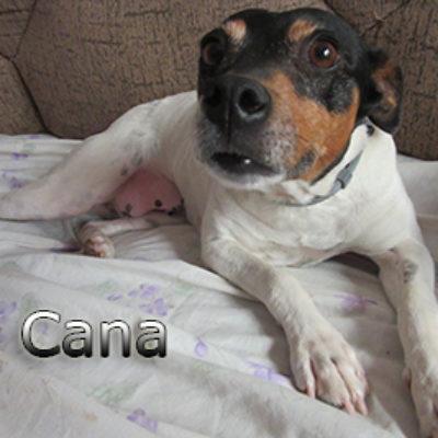 Cana-(8)web