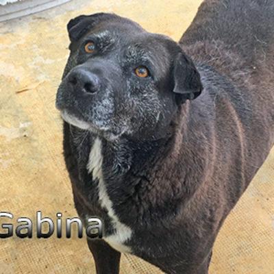 Gabina-(1)web