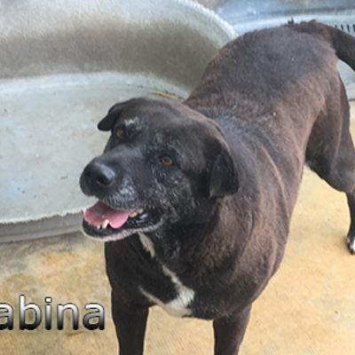 Gabina-(3)web
