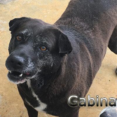 Gabina-(5)web