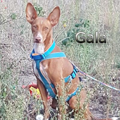 Gala_Update_12092019-(1)web