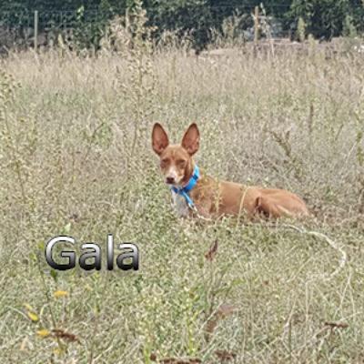 Gala_Update_12092019-(3)web