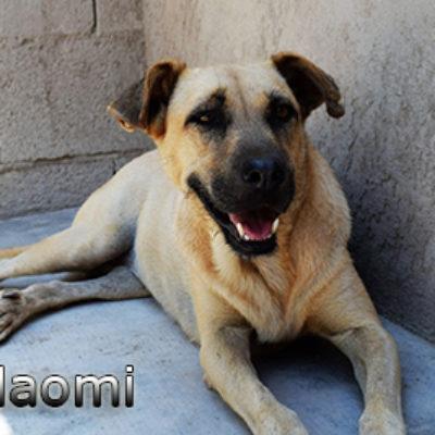 Naomi-(2)web