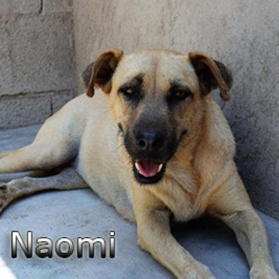 Naomi-(3)web