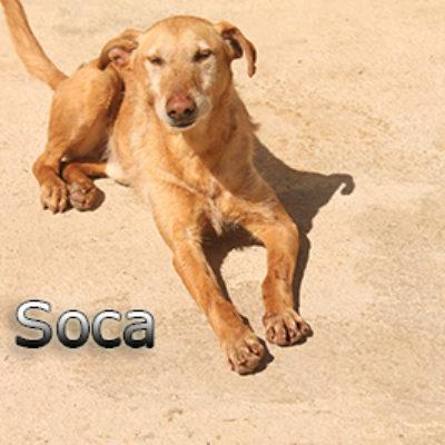 Soca-(5)web
