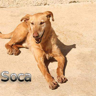 Soca-(6)web