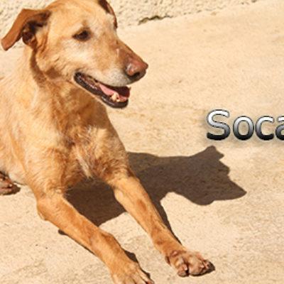Soca-(7)web