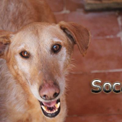 Soca-(8)web