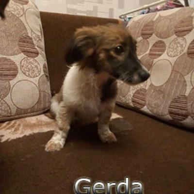 Gerda2-(14)web