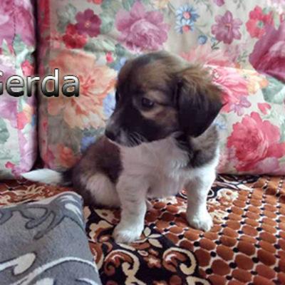 Gerda2-(6)web