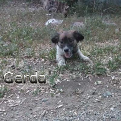 Gerda2-(7)web