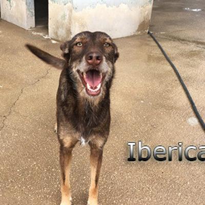 Iberica-(11)web