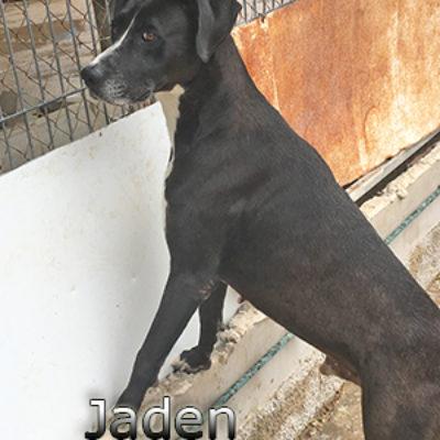 Jaden-(2)web