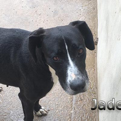 Jaden-(3)web