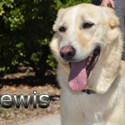 Lewis-(1)web