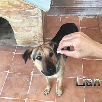 Lian-(4)web