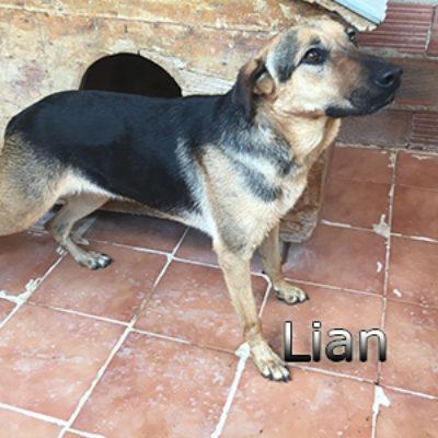 Lian-(6)web