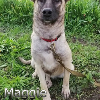 Maggie-(3)web