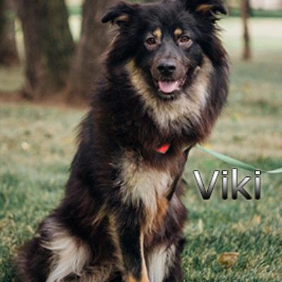 Viki_072019-(3)web