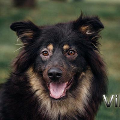 Viki_072019-(4)web