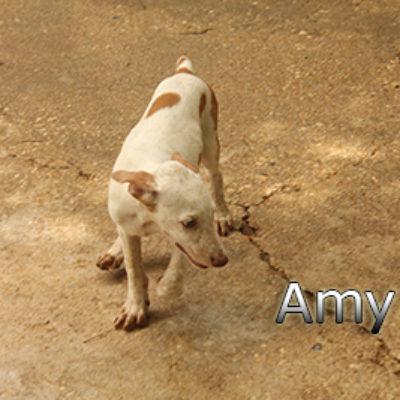 Amy-(1)web