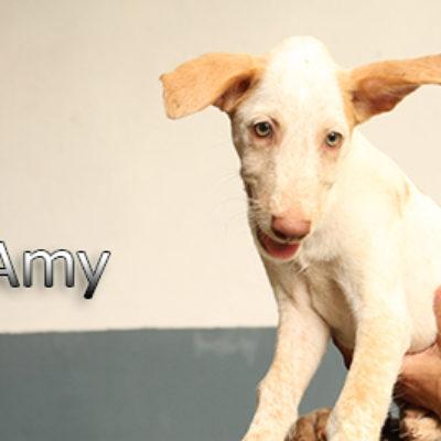 Amy-(2)web