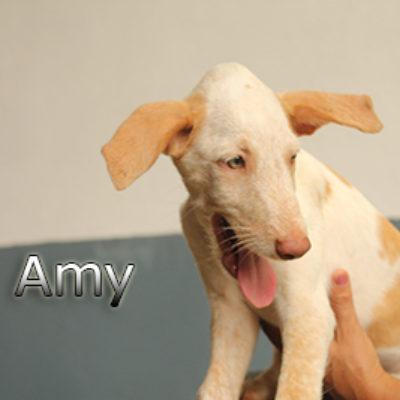 Amy-(4)web